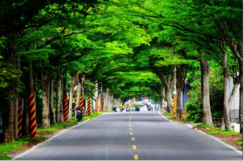 美濃廣興街(高106鄉道)綠色隧道 2