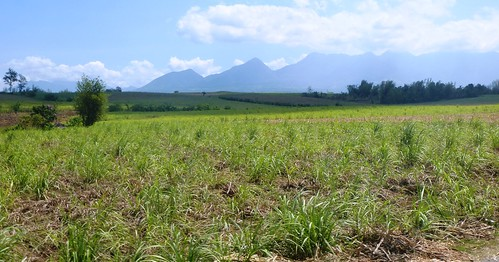 P16-Negros-Bacolod-San Carlos-route (1)