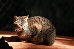 Clair & Obscur s'abattent sur le chat.