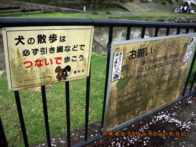 日本東京深大寺溫泉周邊賞櫻花22