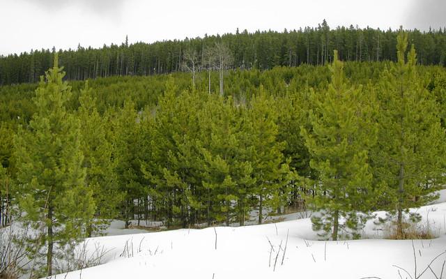 2008 West Bragg Creek-1033