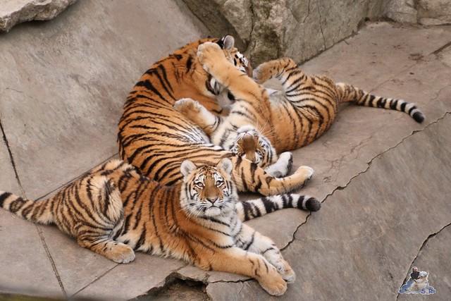 Tierpark Berlin 25.12.2051   140