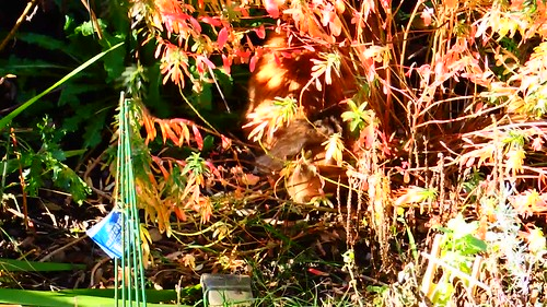 """Find Dhyana in her Automn garden """"forest"""" she is very busy lol"""
