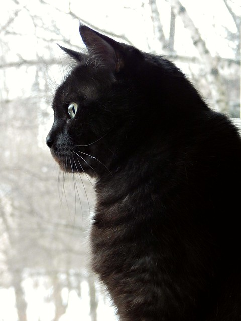 чёрный кот Муся | Musia the black cat | Хорошо.Громко.