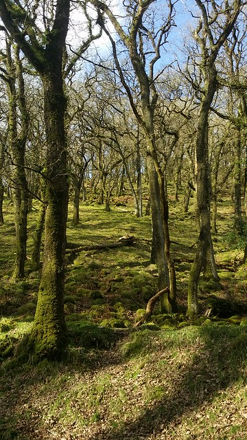 Woodland below Ashbury Tor