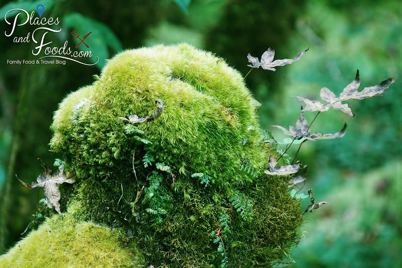doi inthanon ang ka nature trail beautiful moss