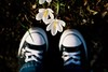 Sun + flowers + chucks = love