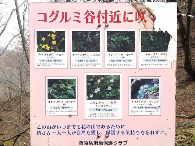 御池岳 コグルミ谷 コグルミ谷付近に咲く花