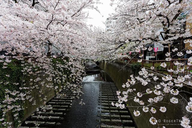 20160405-025-Cherry Blossoms at Meguro-gawa canal