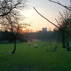 #agneau #printemps #sunset #Pons #CharenteMaritime #PoitouCharentes - Photo of Villars-en-Pons