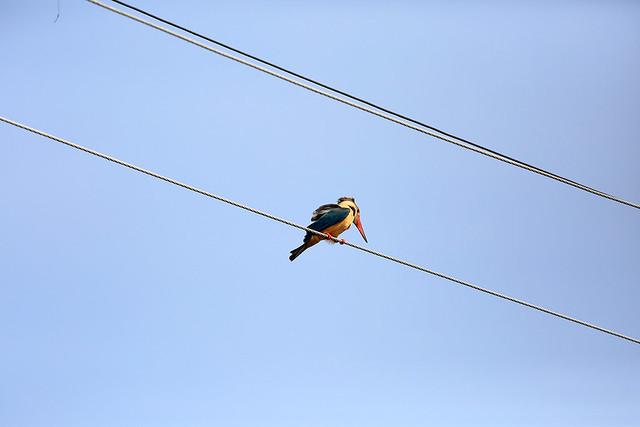 1604India-Birds1