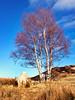 Rannoch Moor Tree