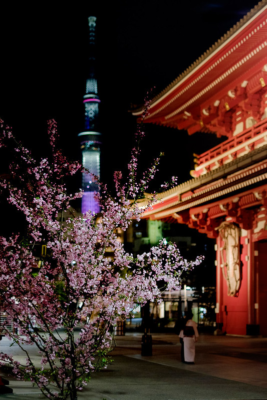 桜・宝蔵門・スカイツリー