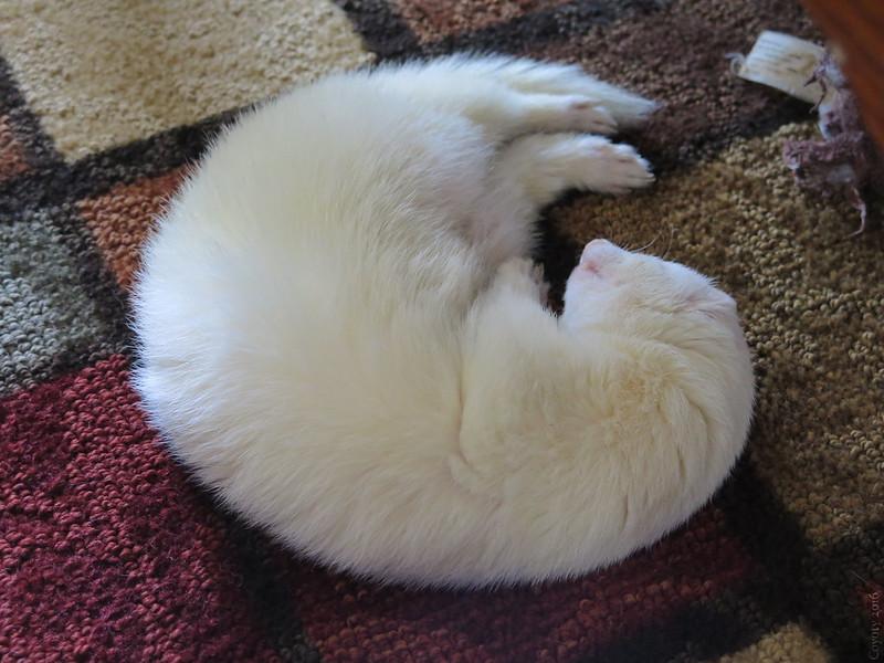 Sleeping Bandit