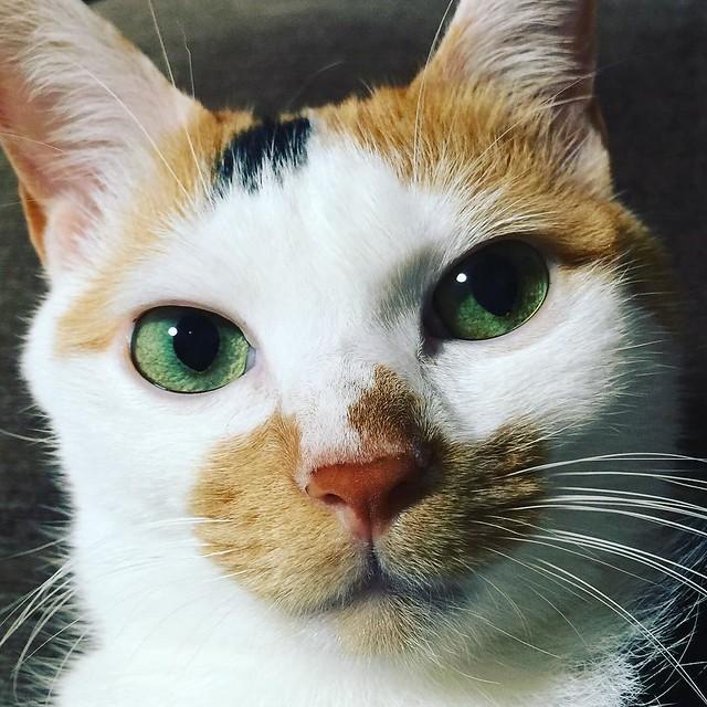 #cat #猫 #ねこ 🎅🎅🎅
