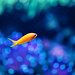 Little fish :)