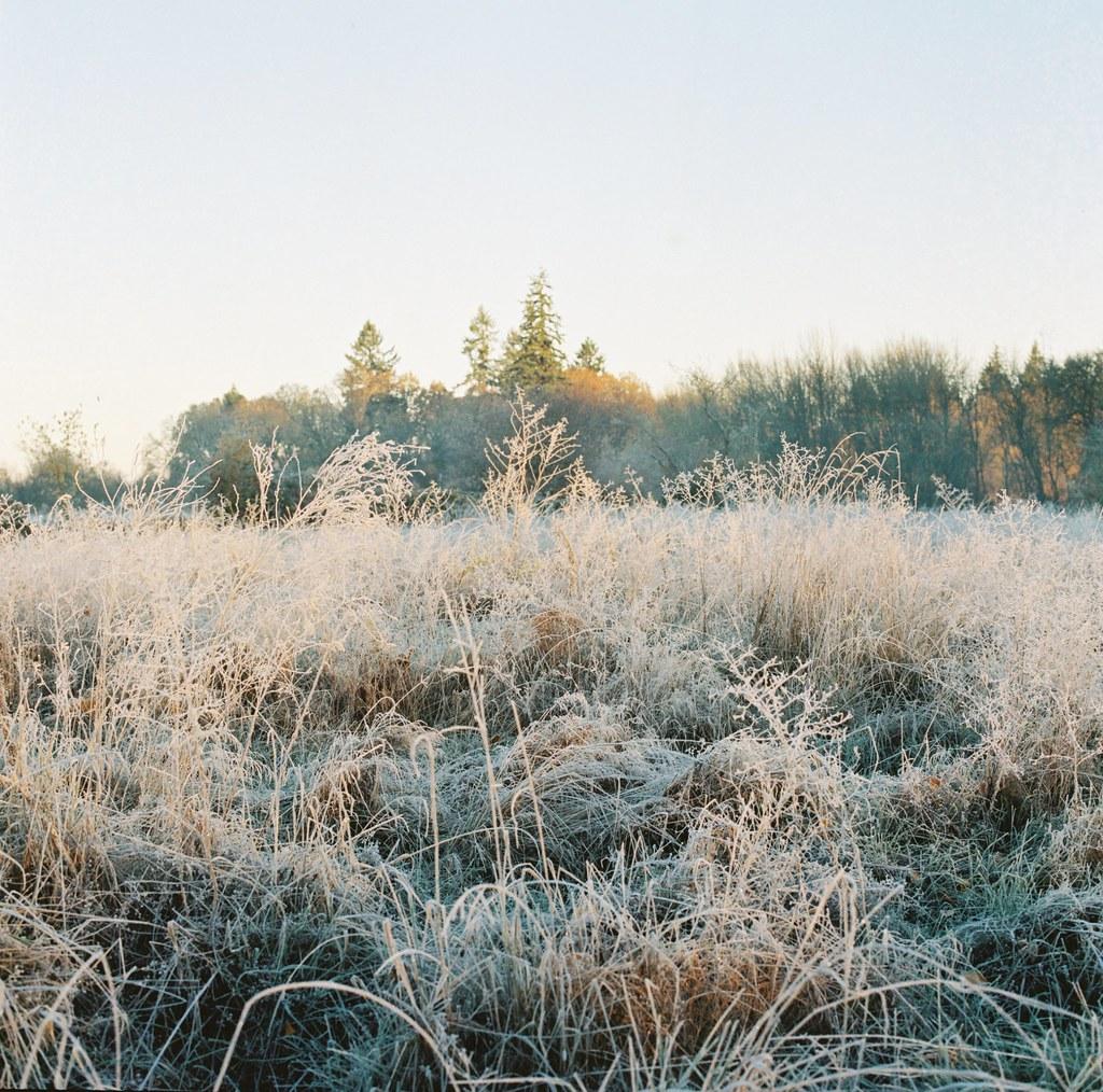 frosty field.