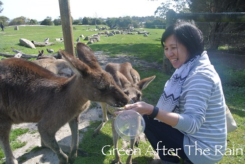 150911g Phillip Island Maru Koala and Animal Park _031
