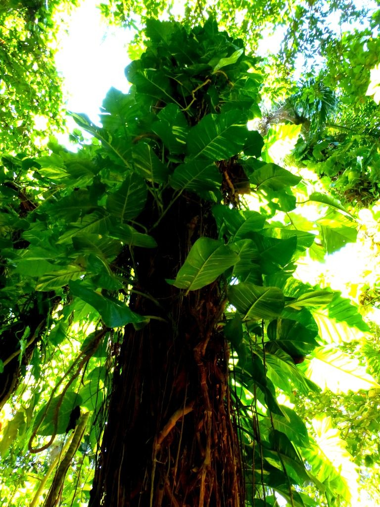 vines climbing tree