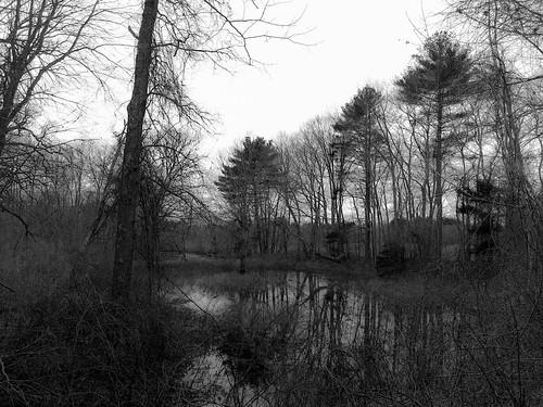 trees blackandwhite bw monochrome us unitedstates massachusetts swamp bridgewater mobilephonephotography iphoneography iphone6