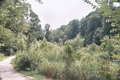 Nine Mile Run Trail and Frick Park Woodland