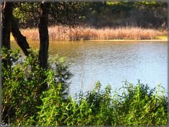 Laguna del Portil-Huelva (Spain)