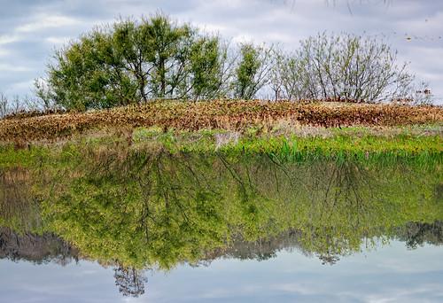 sky panorama usa cloud reflection tree water landscape florida cloudy calm swamp marsh lakeland centralflorida circlebbarreserve ©edrosack