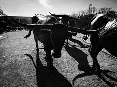 先鋒廣場, 開拓者廣場, 達拉斯, 德克薩斯州, 德州, 美國, 美利堅合眾國, Pioneer Plaza, Dallas, Texas, Tejas, United States of America, United States, America, The States, USA, US