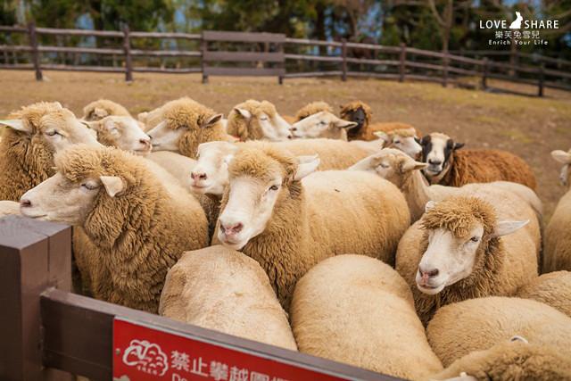 【清境農場一日遊】清境農場處處異國景點!一日遊行程不亦樂乎!