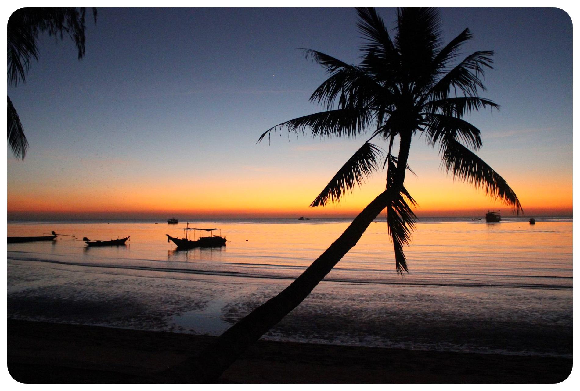 koh tao sunset palm tree