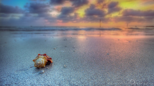 sunset shells colors gold twilight goldenhour clearwater sandkeypark