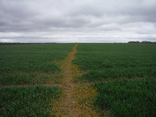 Usually well-cleared path across arable field