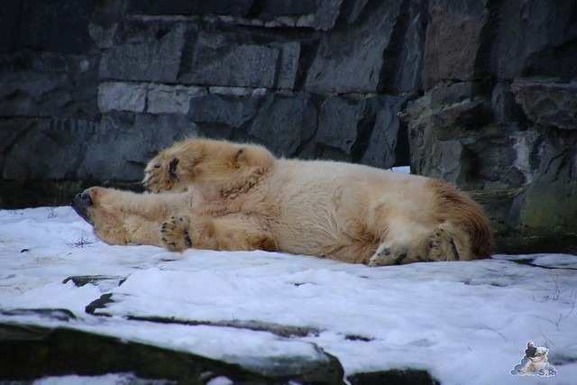 Tierpark Berlin 09.01.2016  021