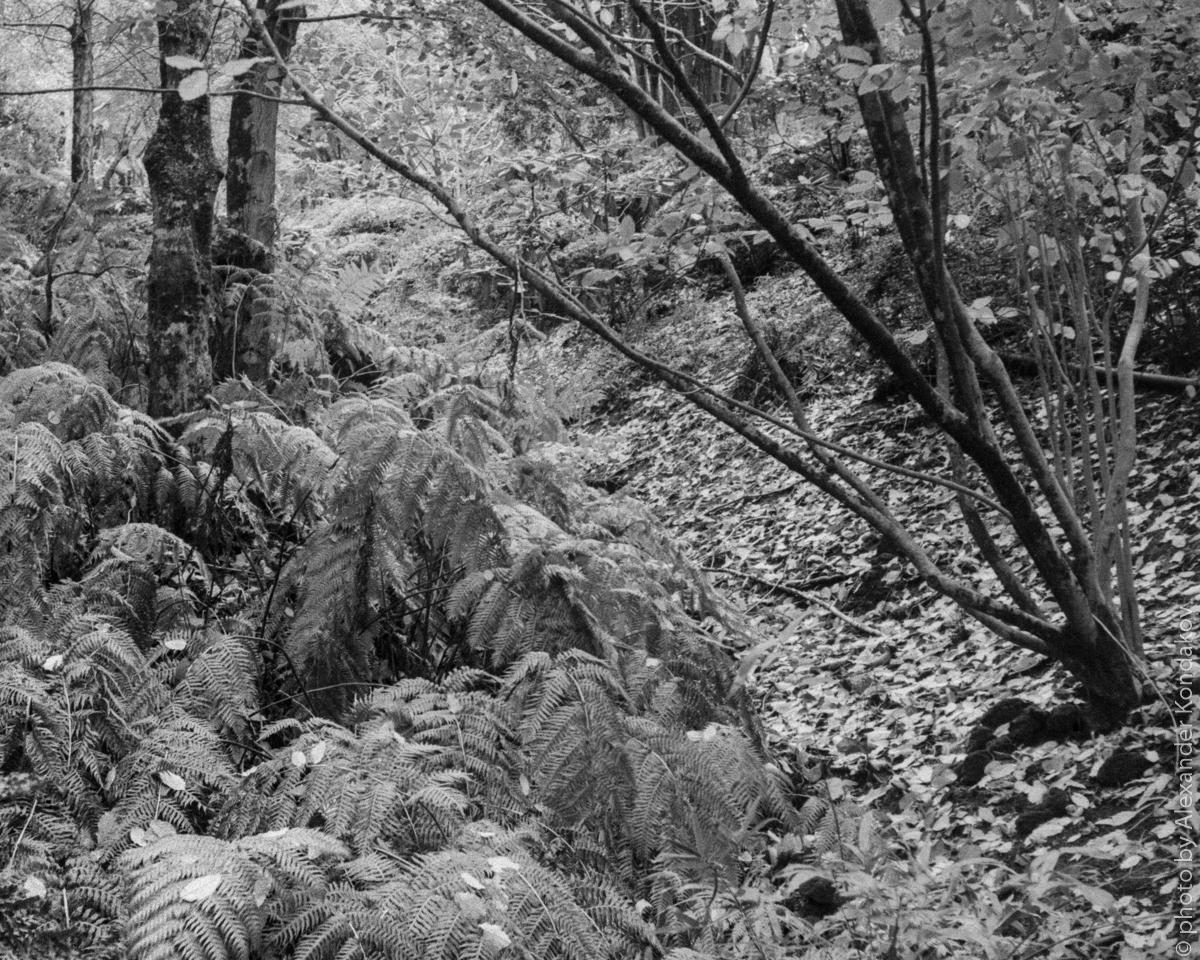 Australia. Mount Lofty Botanic Garden
