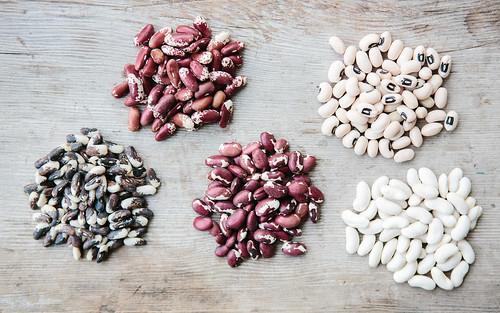llano seco beans
