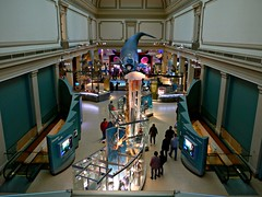 Floating whale, National Museum of Natural History, Washington, DC
