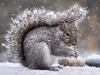 snowy by marianna armata