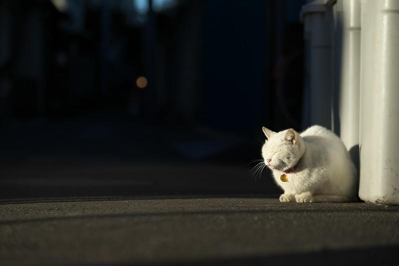 東京路地裏散歩 2016年1月24日