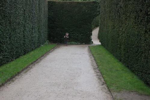 Powis Castle hedges 1