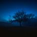 The Anthropomorphic Tree by Maximecreative