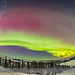 Classic Curtains of the Auroral Oval