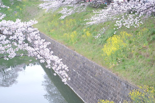 Hi-Key Sakura viewing at Chidorigafuchi moat 12