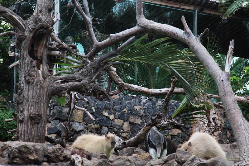 Разношёрстная классика Тенерифе в феврале. Карнавал на Тенерифе
