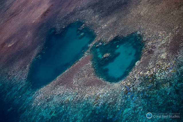 Coral bleaching spread more than feared