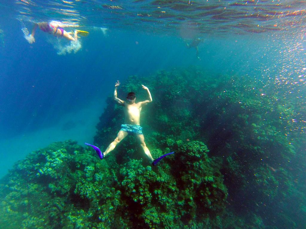 Excursión al arrecife en las islas caimán con el MSC Opera al fondo islas caimán - 26276632355 42a56f5ee1 b - Snorkel en las Islas Caimán