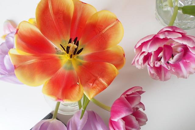 Tulips21