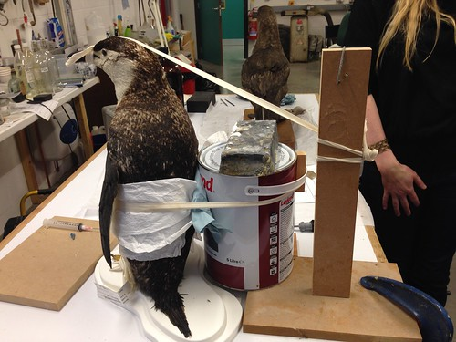 Penguin repair