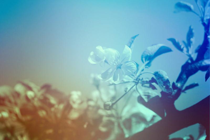 blur-dreamy-texture-texturepalace-27