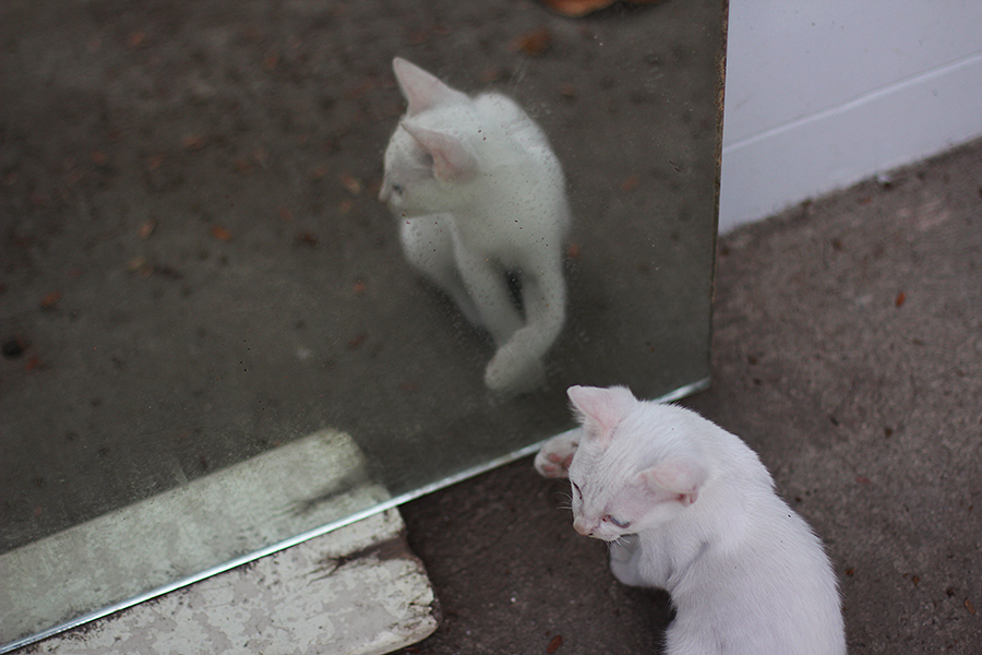 Cats-and-mirrors_03