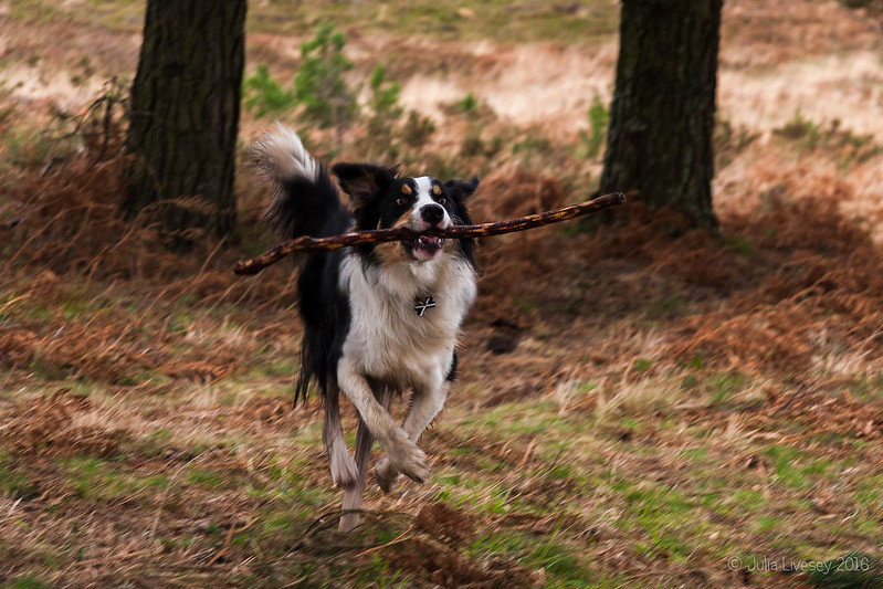 Eddie running with his stick